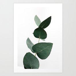 Eucalyptus 4 Art Print