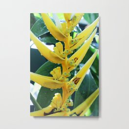 Yellow Heliconia Close-Up Metal Print