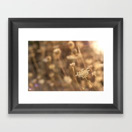 Sunflare Framed Art Print