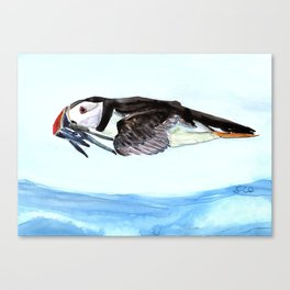 Atlantic Puffin flying over the ocean Canvas Print