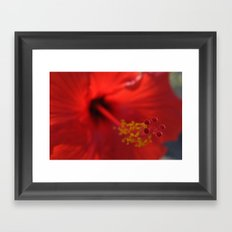 Hibiscus center puff Framed Art Print