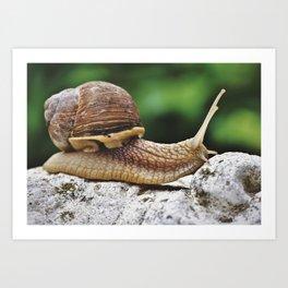 Snail Shell Mollusk Art Print
