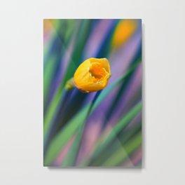 Itsy Bitsy Daffodil Bloom Metal Print