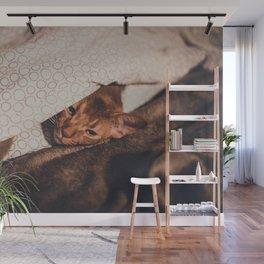 Cat by Tillmann Hübner Wall Mural