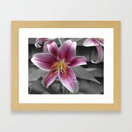Stargazer Lily Framed Art Print