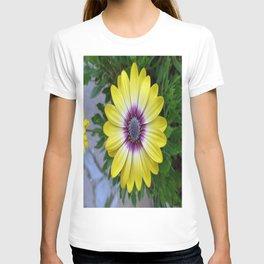 Pretty as Sunshine T-shirt