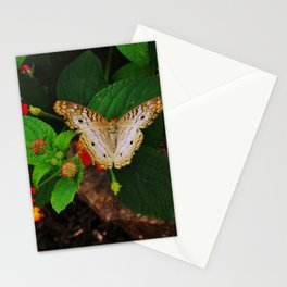 White Peacock Butterfly Stationery Cards