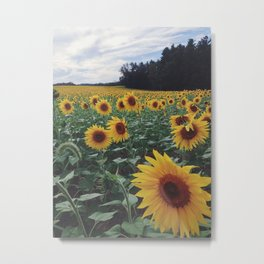Sunflower Field Metal Print