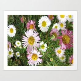 Daisies in the Grass Art Print