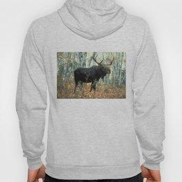 Huge Moose Hoody