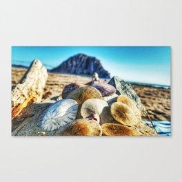 Sand Dollar Delight Canvas Print
