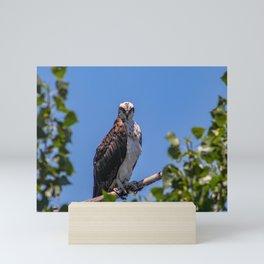 A Bird's Stare Mini Art Print