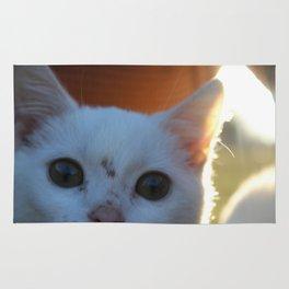 Cute White Kitten in the Sun Rug
