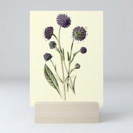Flower DEVIL S BIT SCABIOUS Mini Art Print