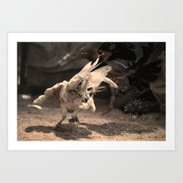 Cockfighting 8 Art Print