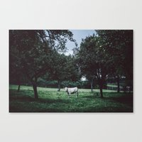 bull Canvas Prints featuring Bull by Tomas Hudolin