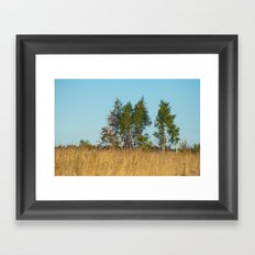 Birches in the golden field 450 Framed Art Print