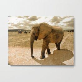 Wildlife big Elephant Metal Print
