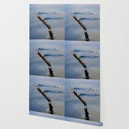 Damselflies Wallpaper