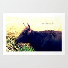 black bison Art Print