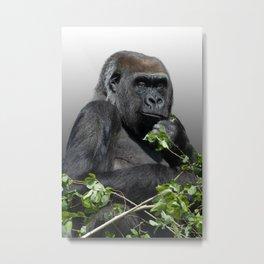 Gorilla Asante Metal Print