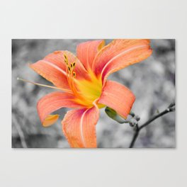 flower in grey Canvas Print