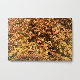 Japanese Maple Fall Leaves Metal Print