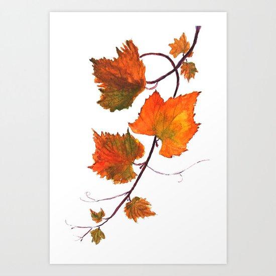 grapevine in autumn Art Print