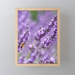 Bee Lavender Framed Mini Art Print