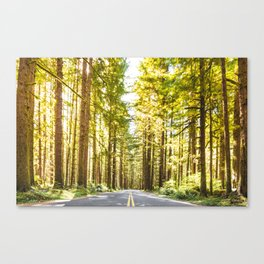 On the road on the forest Canvas Print