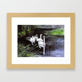 Swans on the Canal Framed Art Print