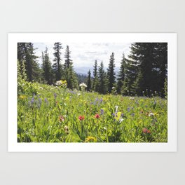 Sub-alpine Meadow Art Print