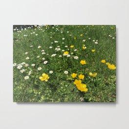 Yellow And White Daisies Metal Print