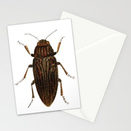 Lithograph of Pine Borer (Chalcophora Mariana) Insect Stationery Cards