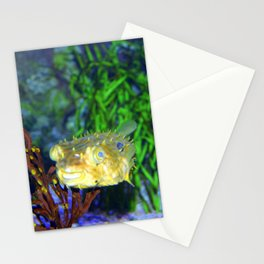 Striped Burrfish Stationery Cards
