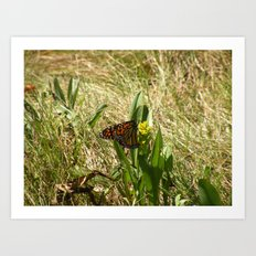 Butterfly at the Marsh Art Print