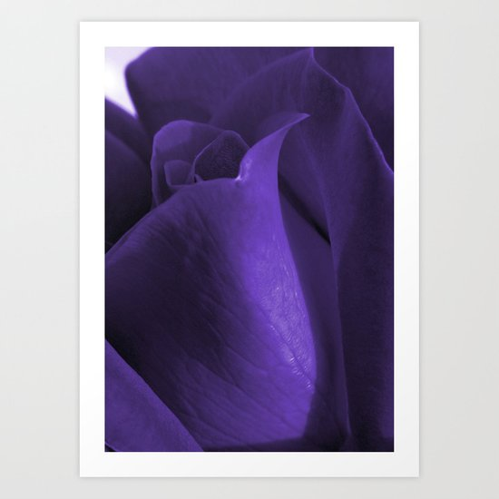 purple rose Art Print
