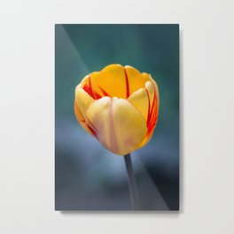 Colorful Tulip Metal Print