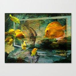 Curious Fish Canvas Print
