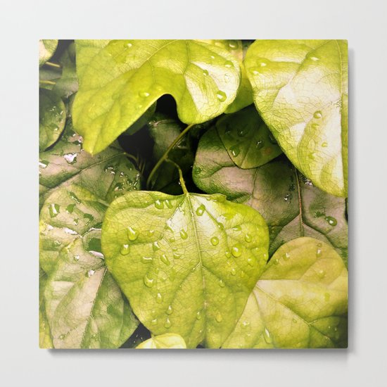 Green Vines in the Morning Dew Metal Print
