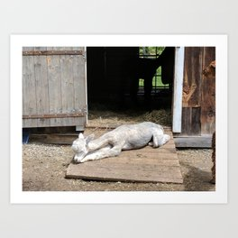 Naptime for Romeo Art Print