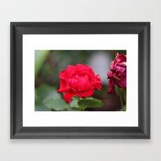 Rosy youth Framed Art Print