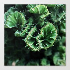 Emerald green Cactus Botanical Photography, Nature, Macro, Canvas Print