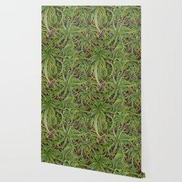 Aloe Darlin' Wallpaper