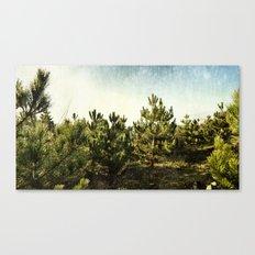 forêt d'épines Canvas Print