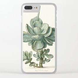 Herman Saftleven - Succulent (probably a Cotyledon orbiculata) - 1683 Clear iPhone Case