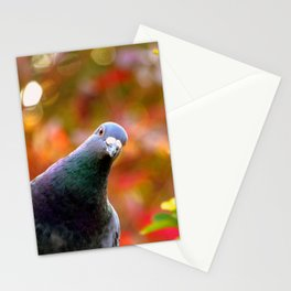 Cute Curious Pigeon Stationery Cards