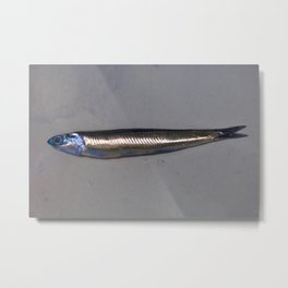 Fish/Pez Metal Print