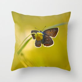 Lovely evening Throw Pillow