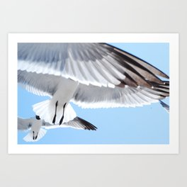birds in flight up close and personal Art Print